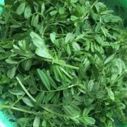 清炒野豌豆尖的做法