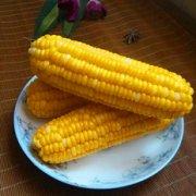 水煮甜玉米的做法