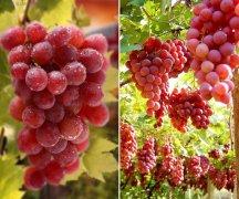 葡萄的18种好处 葡萄的功效与作用