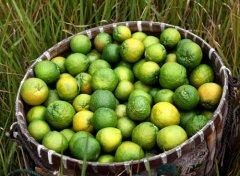 秋季吃橘子的6大好处