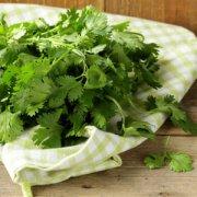 【香菜煮水的功效】香菜煮水的功效与作用_香菜煮水可以祛斑吗