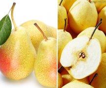 梨子的营养价值以及适用人群