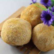 【鲜猴头菇怎么保存】鲜猴头菇的营养价值_鲜猴头菇的价钱是多少