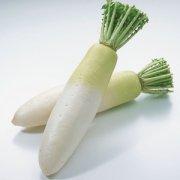 【白萝卜不能和什么一起吃】白萝卜不能与什么同食