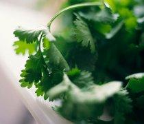 【芹菜叶子的功效】芹菜叶子能吃吗_芹菜叶子怎么做好吃_芹菜叶子做法
