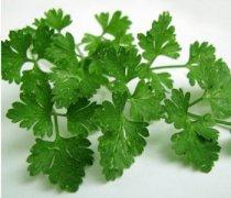 【芹菜叶子能吃吗】芹菜叶子怎么做好吃_芹菜叶子能经常吃吗