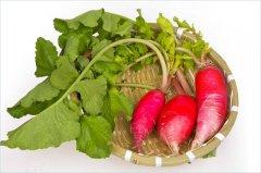 红萝卜排骨汤的功效,白萝卜排骨汤的做法