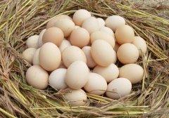 鸡蛋的6种吃法等于白吃