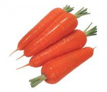 【胡萝卜怎么吃丰胸】生吃胡萝卜丰胸吗_吃胡萝卜丰胸效果如何