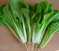 【炒小白菜】炒小白菜的家常做法_炒小白菜怎么做好吃