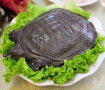 【喝甲鱼血能治阳痿吗】治阳痿的食物_治阳痿的穴位