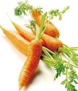【胡萝卜的功效】胡萝卜的做法_胡萝卜怎么吃护眼