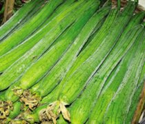 【丝瓜的药用价值】丝瓜的营养价值_丝瓜的功效与作用