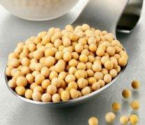 【黄豆的功效与作用】黄豆的营养价值_黄豆的功效与作用及禁忌