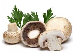 寒冬吃蘑菇的五大好处详解