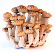 【蘑菇的种类】蘑菇有多少种