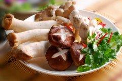 鸡腿菇种植方法,鸡腿菇怎么做好吃