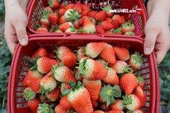 孕妇可以吃草莓吗_孕妇吃草莓好吗?