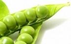 吃什么蔬菜对肝脏有害