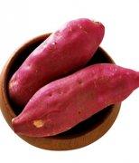 【红薯发芽了还能吃吗】红薯的营养价值_红薯的做法