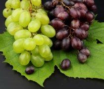 【吃葡萄会胖吗】葡萄的功效与作用