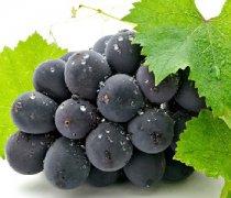 【葡萄的功效与作用】葡萄的营养价值_葡萄的热量